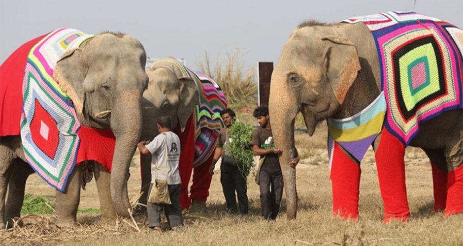 Centro de Cuidados y Conservación de Elefantes Wildlife SOS. Foto: Roger Allen.