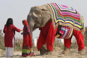 Centro de Cuidados y Conservación de Elefantes Wildlife SOS